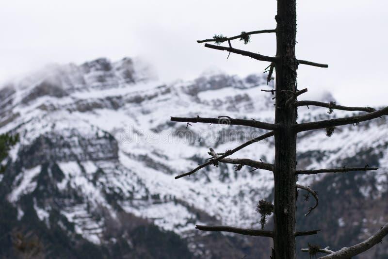 Дерево без листьев со снежной горой на заднем плане стоковые изображения rf
