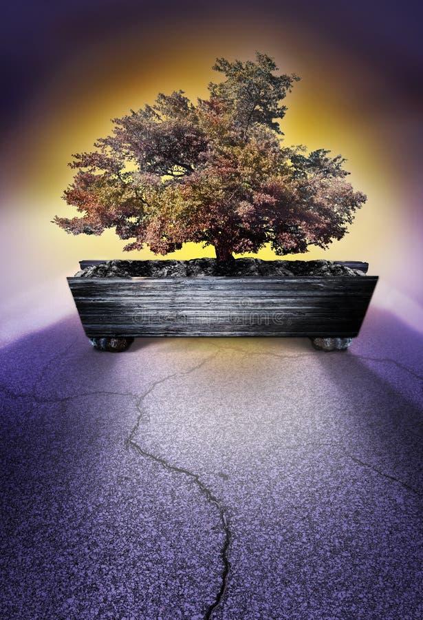 Дерево бонзаев в контейнере стоковая фотография rf