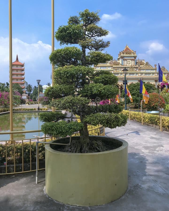 Дерево бонзаев от виска во Вьетнаме стоковое фото rf