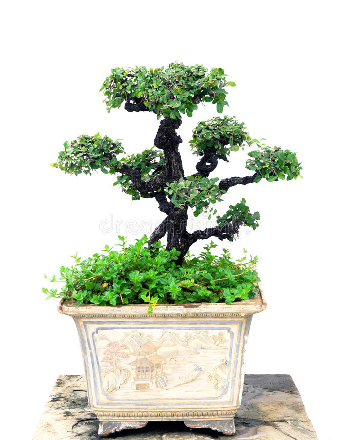 Download Дерево бонзаев стоковое фото. изображение насчитывающей сад - 33733292