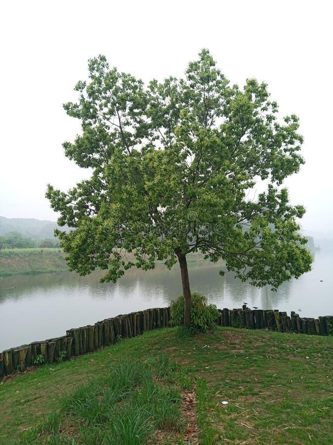 Дерево вдоль реки стоковые фото