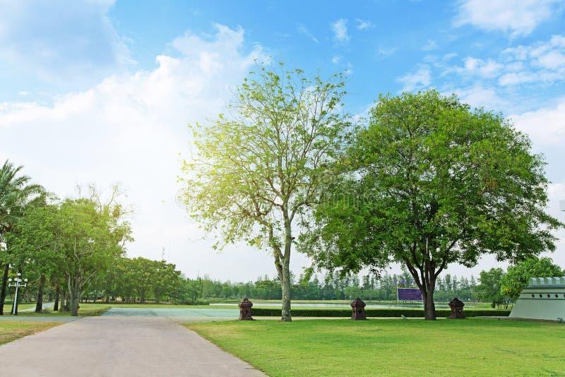Дерево взгляда ландшафта с дорогой стоковая фотография