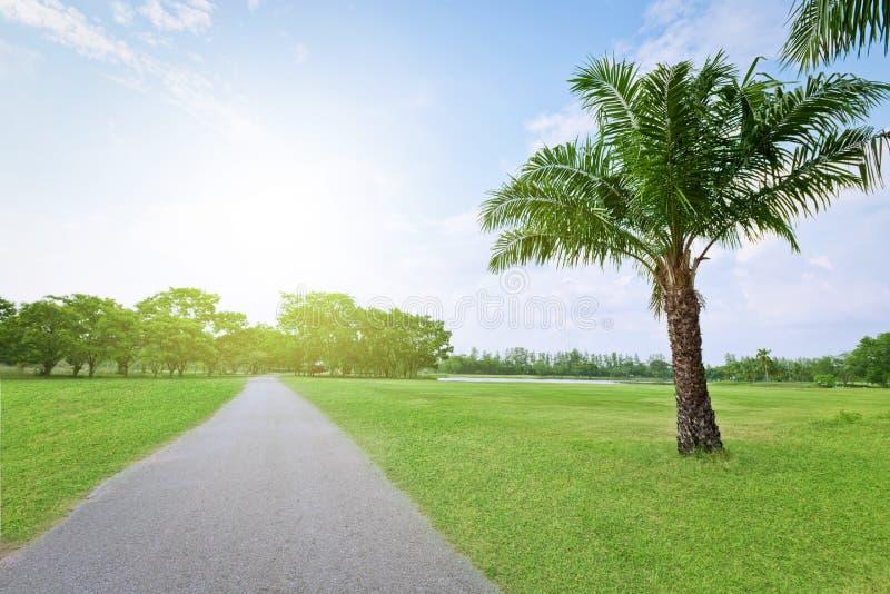 Дерево взгляда ландшафта с дорогой стоковое фото