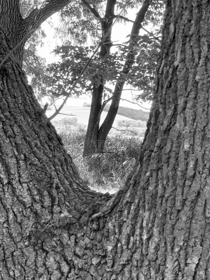 Дерево внутри дерево стоковое фото