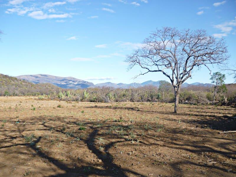 Дерево воды ландшафта пустыни недостаточное наделенное даром предвидения стоковое фото rf