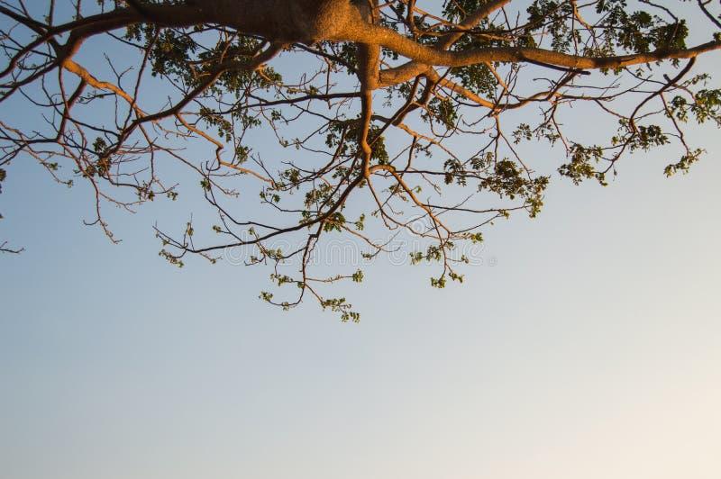 Дерево, возвышающееся под голубым небом стоковые фотографии rf