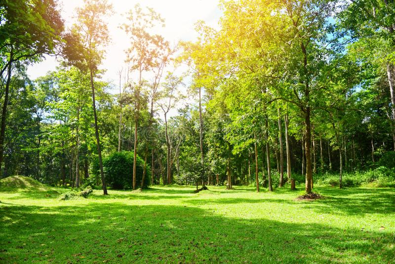 Дерево восхода солнца зеленого парка красивое летом на на открытом воздухе с деревом и поле - яркий солнечный день в луге и эколо стоковая фотография rf