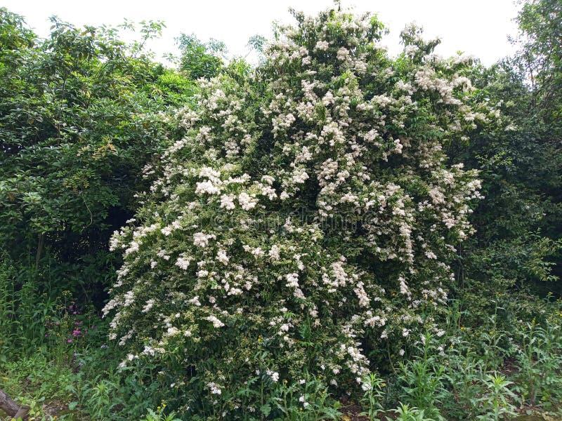 Дерево вполне цветков стоковые фотографии rf