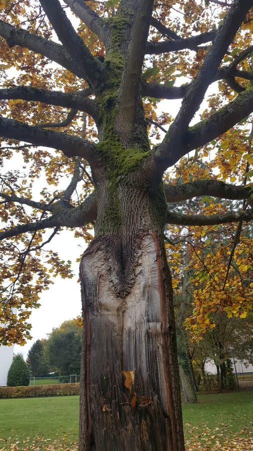 Дерево встречает вспышку молнии стоковая фотография rf