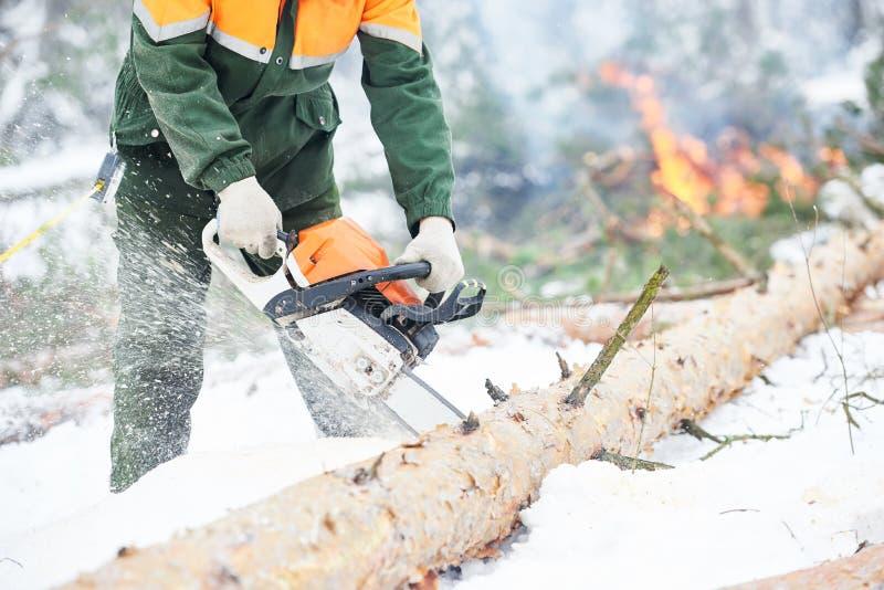 Дерево вырезывания Lumberjack в лесе зимы снега стоковые изображения