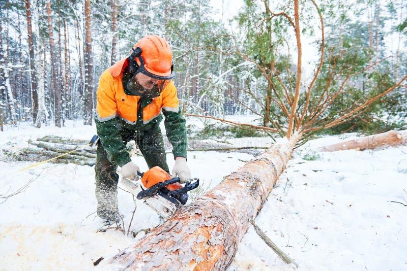 Дерево вырезывания Lumberjack в лесе зимы снега стоковое фото