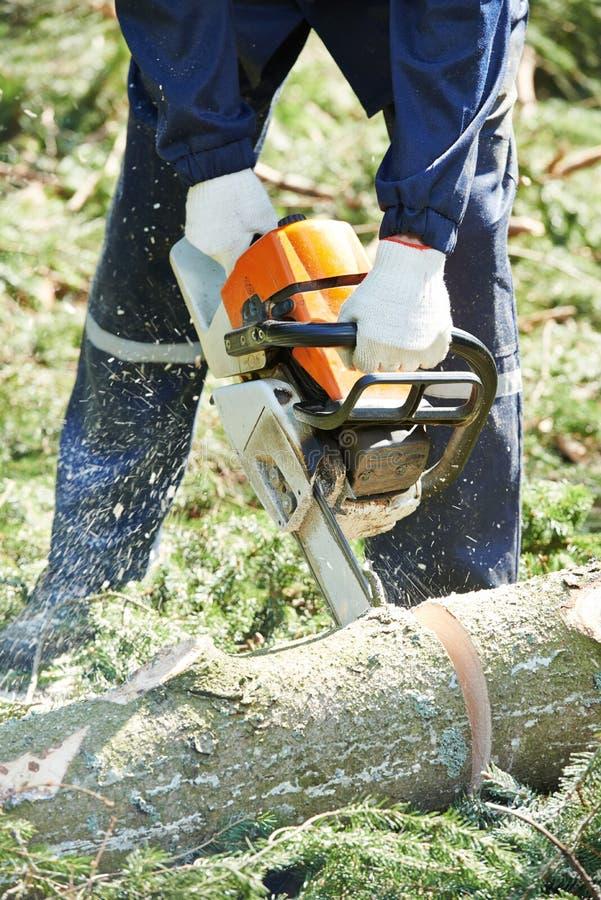 Дерево вырезывания Lumberjack в лесе стоковое фото rf