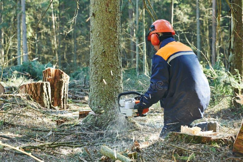 Дерево вырезывания Lumberjack в лесе стоковое изображение