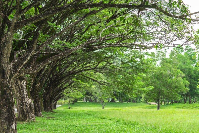 Дерево выровнянное с зеленой травой стоковая фотография