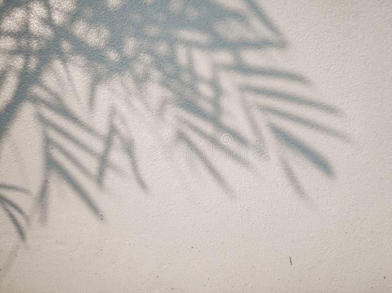 Дерево выходит тень на предпосылку стены, абстрактную предпосылку Cemen стоковое изображение