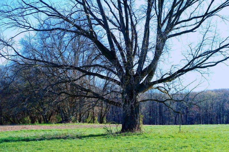 Дерево в белой заводи глины стоковая фотография rf