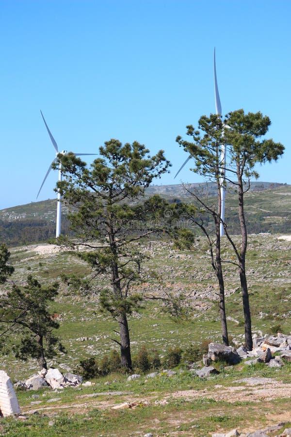 Дерево в горе стоковая фотография rf