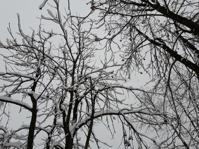 Дерево в зиме, Сербия стоковая фотография