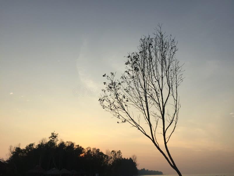 Дерево в золот-голубой волне стоковые изображения