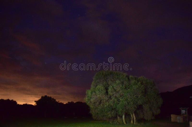 Дерево в конце дней стоковая фотография