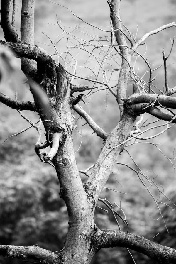 Дерево в месте remote уединения стоковые фото
