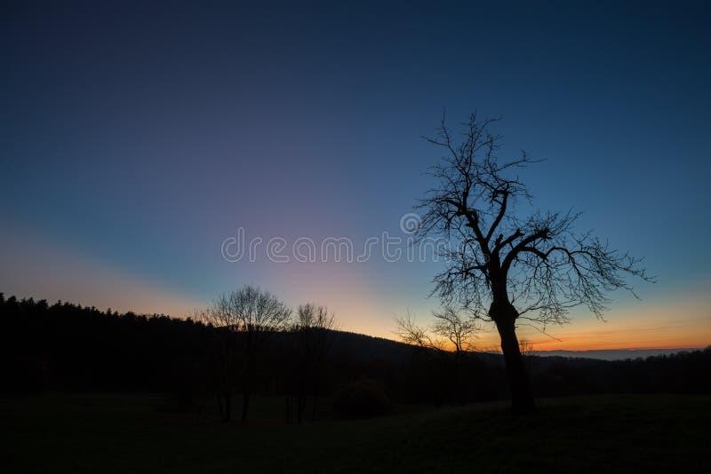 Дерево в небе захода солнца стоковое изображение rf