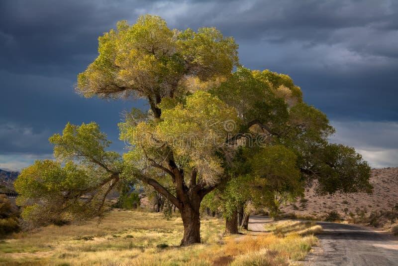 Дерево в Неваде стоковая фотография