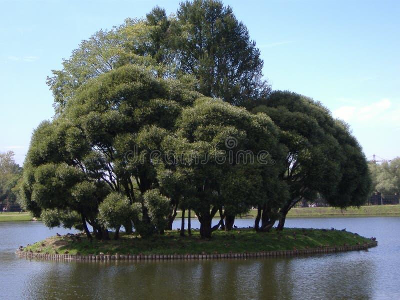 Дерево в отключении лета парка на теплый солнечный день стоковые фото