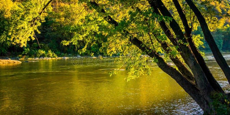 Дерево вдоль реки Shenandoah, в пароме арфиста, западное Virgini стоковые изображения rf