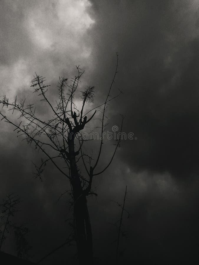 Дерево в пасмурном дне стоковые фотографии rf