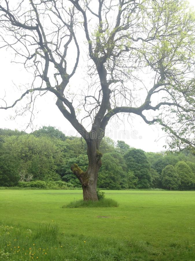 Дерево в поле стоковое изображение