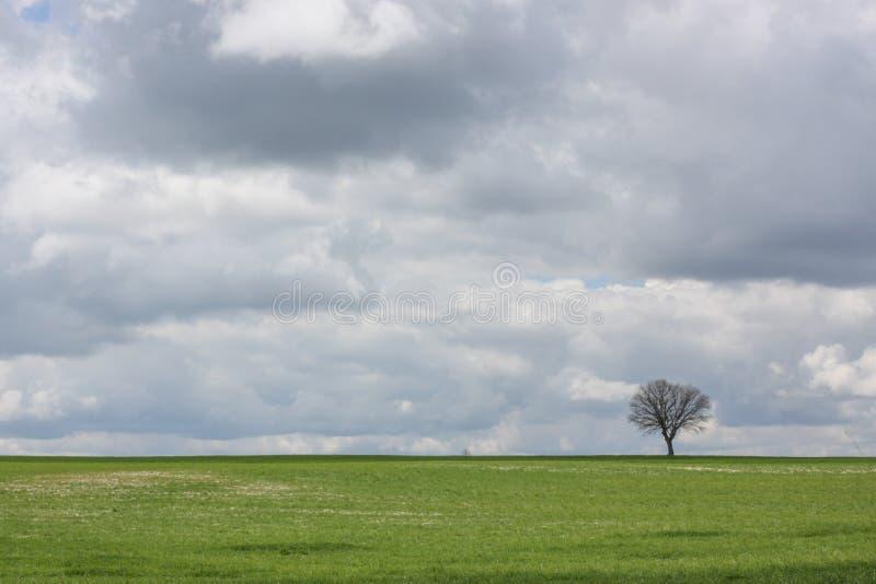 Дерево в равнине стоковое фото