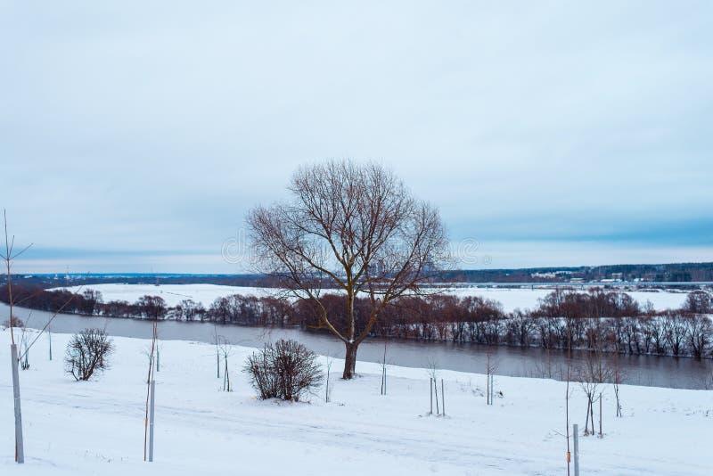 Дерево в расчистке покрытой с снегом В расстоянии река Oka Идя след в снеге стоковые изображения