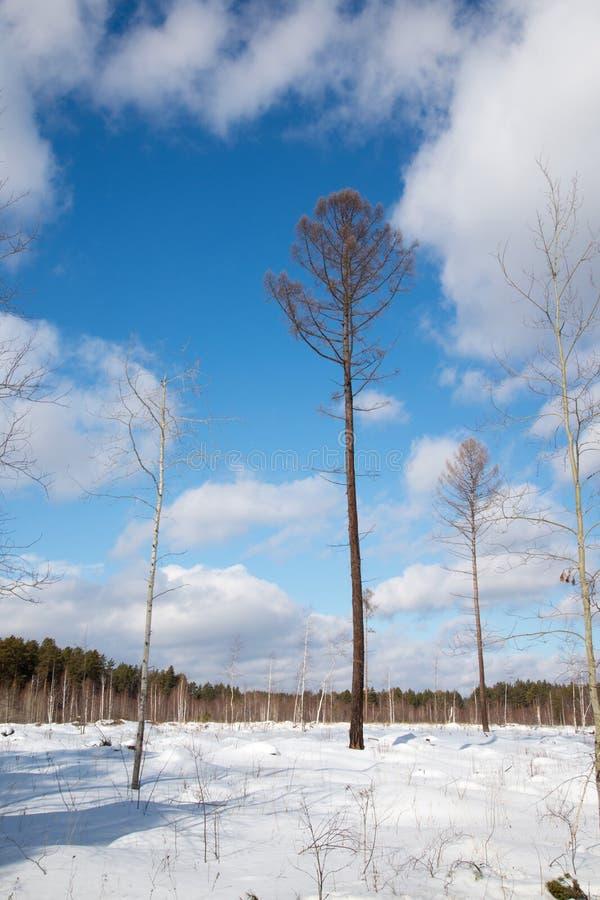 Дерево в середине glade леса Экологическая проблема резать лесов стоковое фото rf