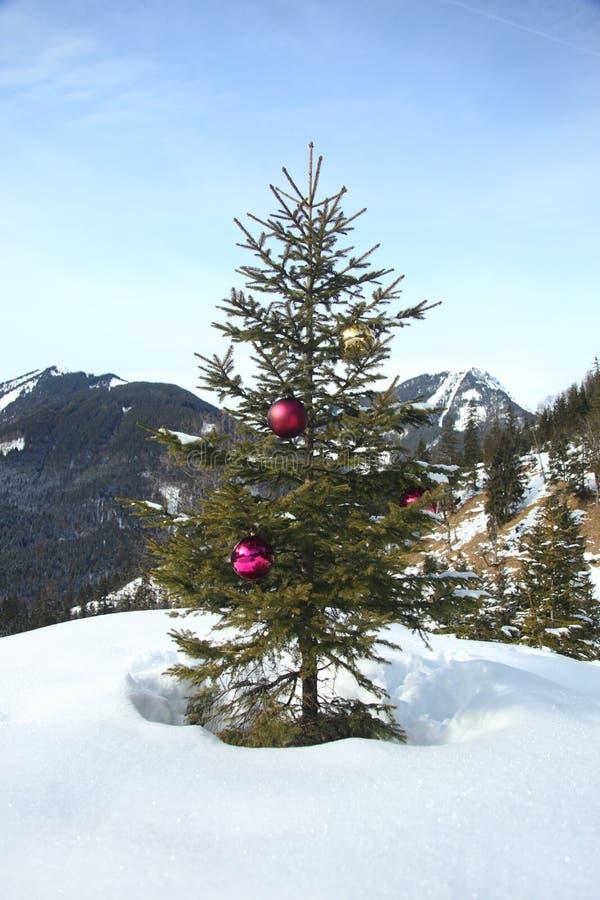 Дерево в снежке стоковое фото rf