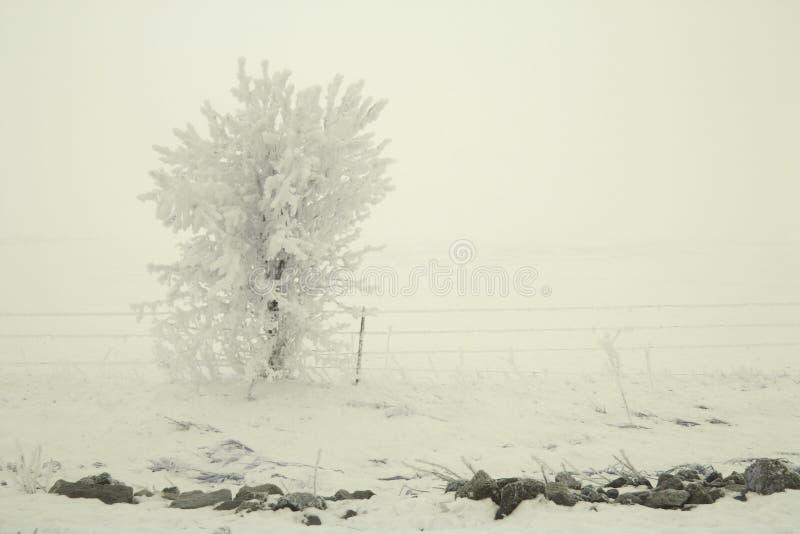 Дерево в снежке стоковые изображения rf