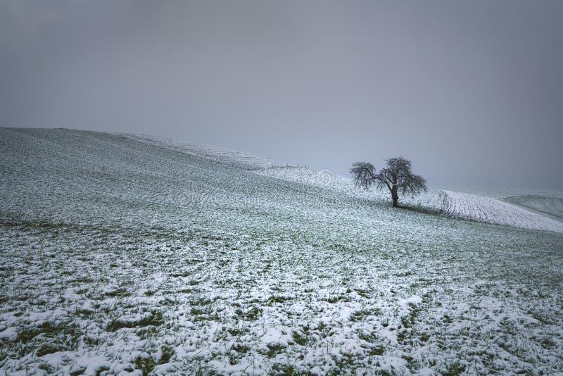Дерево в снежке стоковое изображение