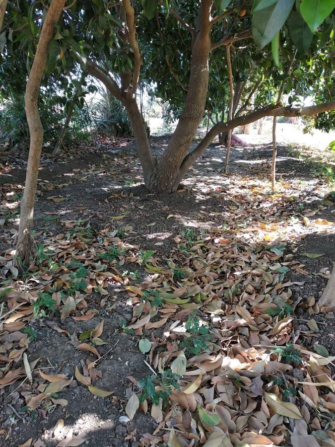 Дерево в ферме с поддержкой стоковые изображения rf