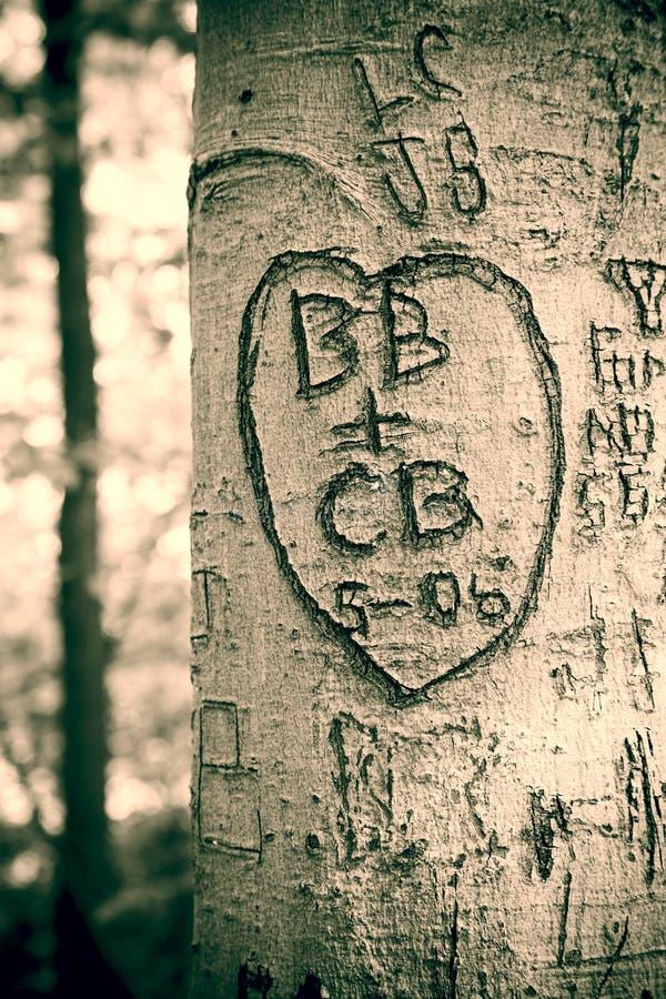 Дерево влюбленности стоковое изображение rf