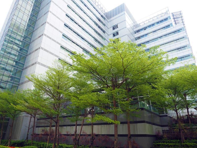 Дерево города стоковая фотография