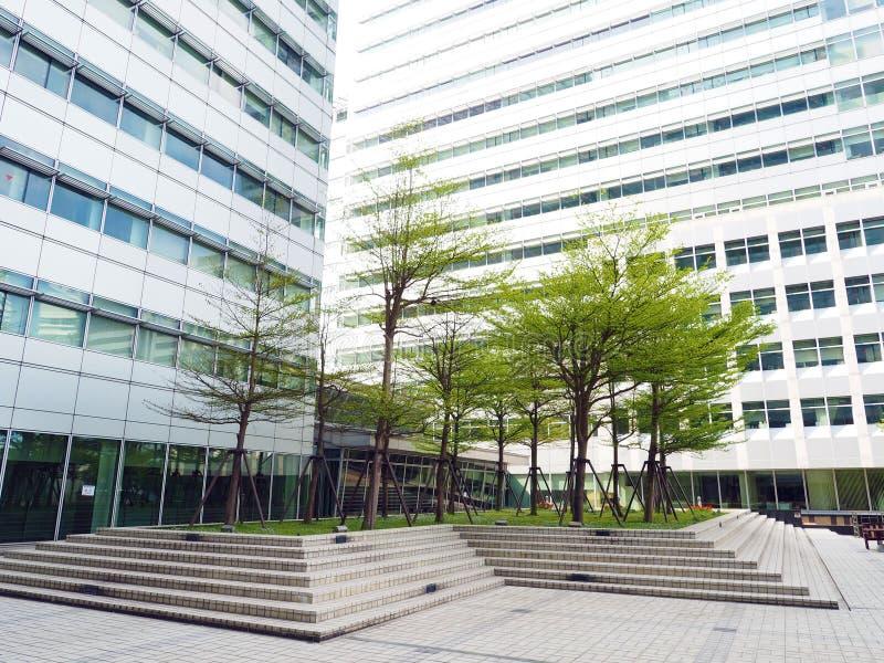 Дерево города стоковая фотография rf