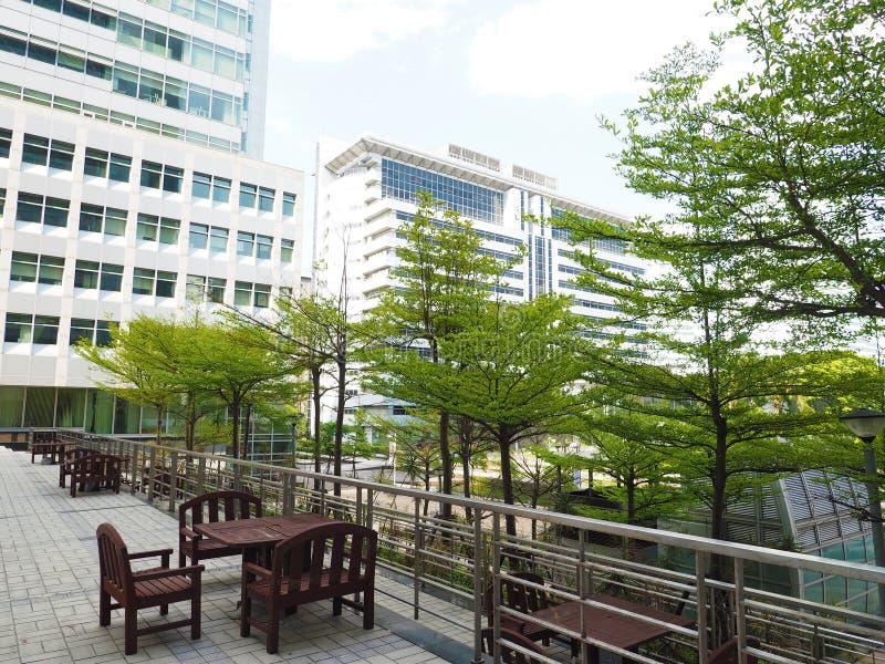 Дерево города стоковое фото rf