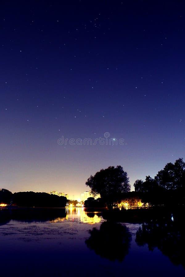 Дерево города ночи стоковое фото