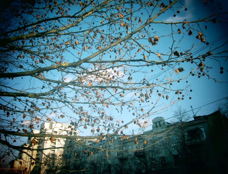 Дерево города стоковые изображения rf
