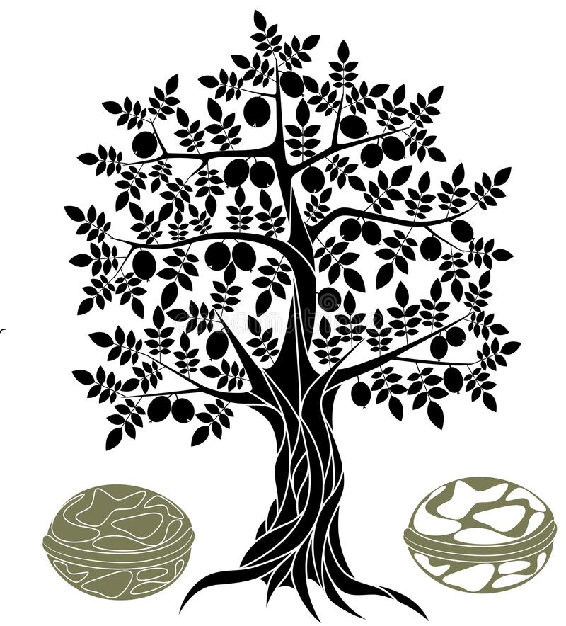 Орех дерево рисунок карандашом