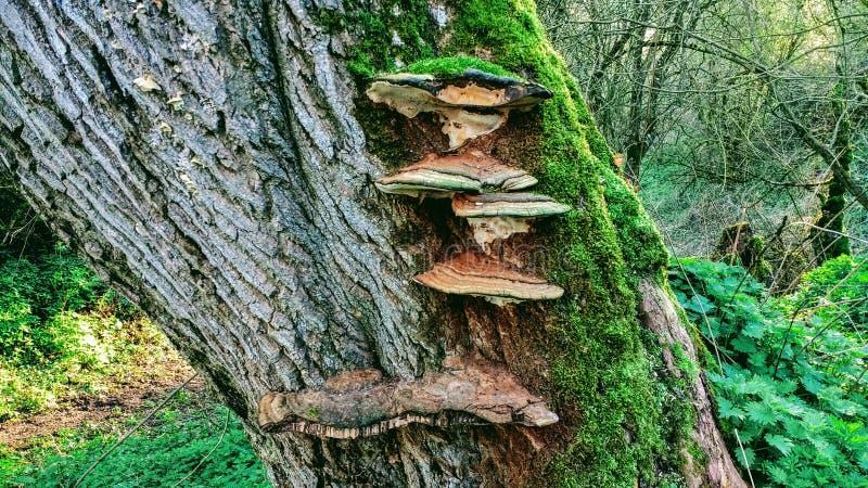 Дерево грибков стоковая фотография rf