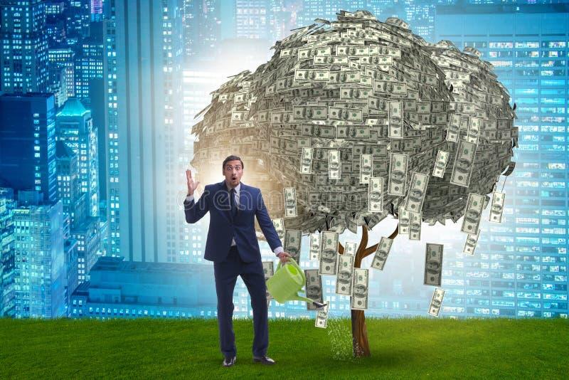 Дерево денег бизнесмена моча в концепции вклада стоковое фото rf