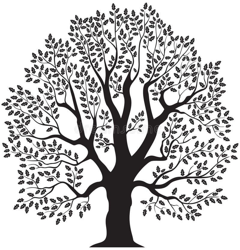Дерево дуба иллюстрация штока