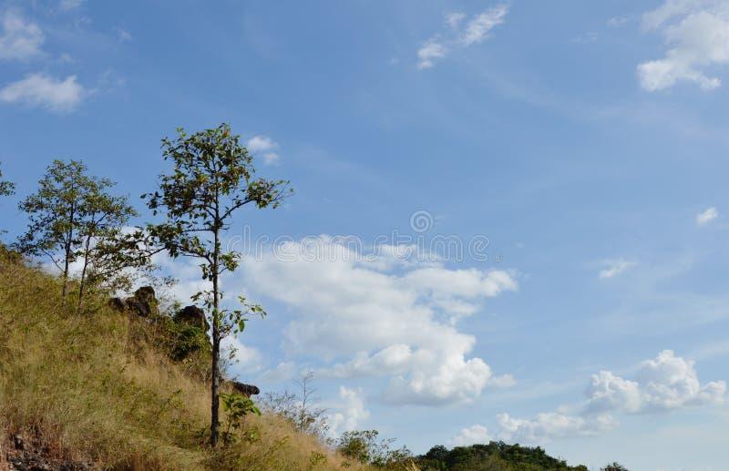 Дерево дуя от ветра на горе Khao Lon в Таиланде стоковая фотография rf