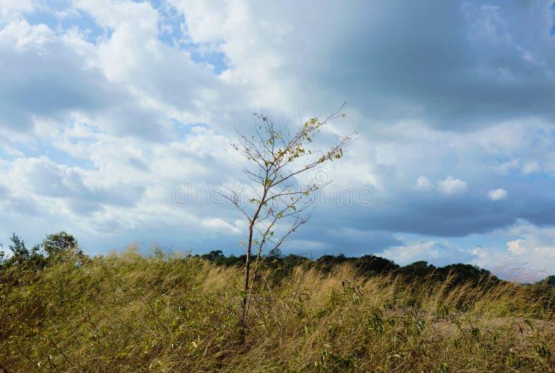 Дерево дуя от ветра на горе Khao Lon в Таиланде стоковое фото